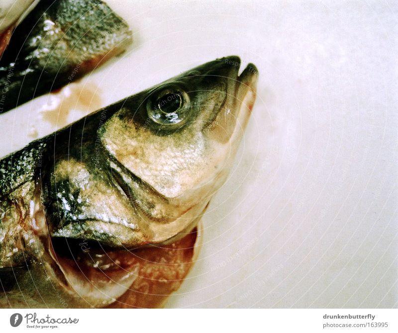 >-----> Farbfoto Innenaufnahme Detailaufnahme Textfreiraum rechts Tag Kunstlicht Tier Nutztier lecker grau rosa rot Fisch