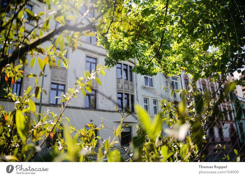 Haus im Grünen Baum grün Stadt Pflanze Blatt Haus Wand Fenster Frühling Mauer Zufriedenheit Deutschland Fassade Europa Schönes Wetter