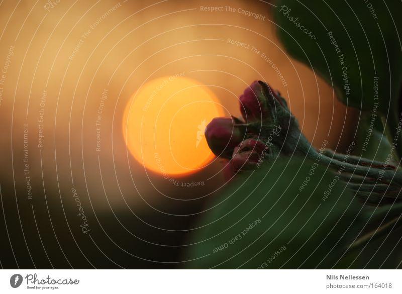 Sonnenunterblütengang Farbfoto Außenaufnahme Makroaufnahme Menschenleer Textfreiraum links Hintergrund neutral Abend Dämmerung Licht Schatten Sonnenlicht