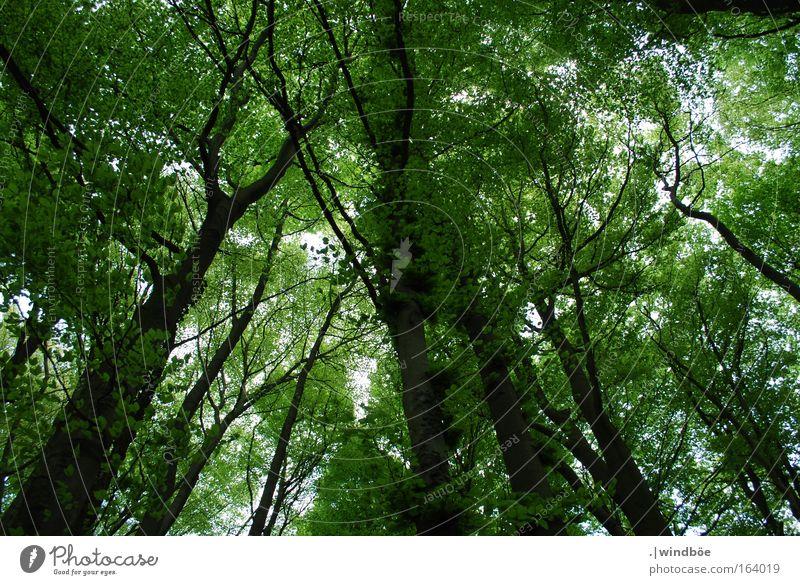 Grüner Himmel Natur Baum grün blau ruhig Blatt Wald Leben Erholung Berge u. Gebirge Frühling Landschaft Luft braun Erde