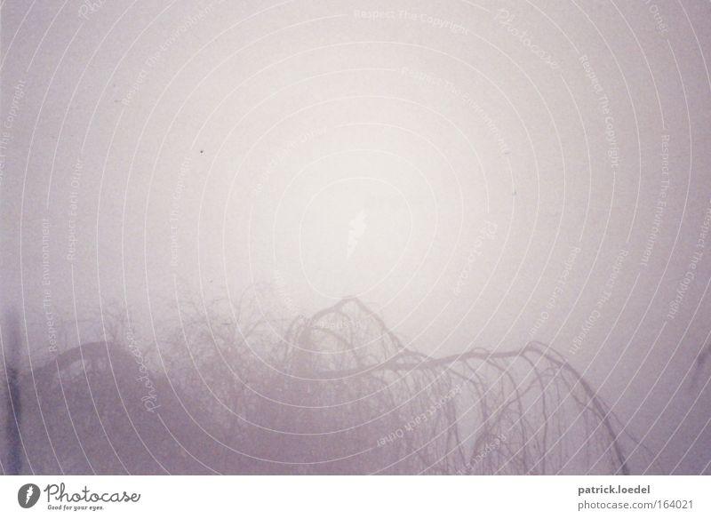 Trauerweide Gedeckte Farben Außenaufnahme Textfreiraum oben Morgen Licht Silhouette Umwelt Natur Himmel Nebel Baum Weide träumen warten dunkel Gefühle Romantik