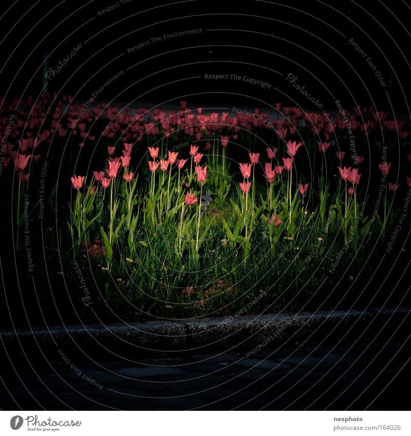 day for night Pflanze Blume dunkel Gras Blüte Frühling Park Deutschland frisch ästhetisch Wachstum authentisch außergewöhnlich Europa leuchten einfach