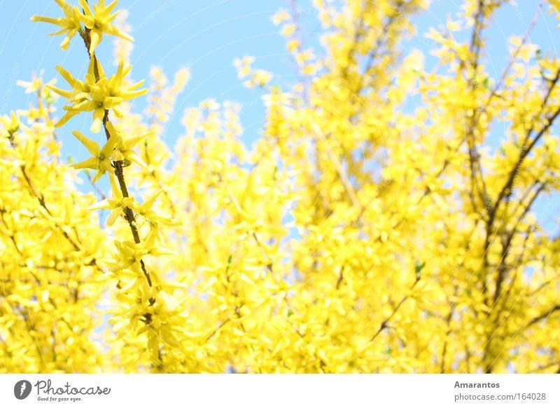 Golden Spring Himmel Natur Pflanze Sonne ruhig Haus Erholung Umwelt Landschaft Leben Frühling Blüte Luft Zufriedenheit Klima Freizeit & Hobby