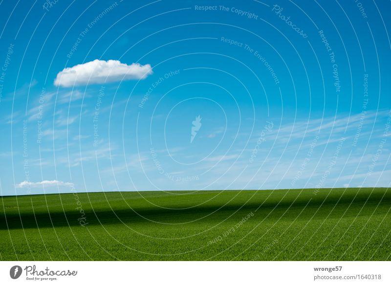 Bördeland Natur Landschaft Pflanze Erde Luft Himmel Wolken Horizont Frühling Schönes Wetter Nutzpflanze Getreidefeld Weizenfeld Feld Unendlichkeit blau grün