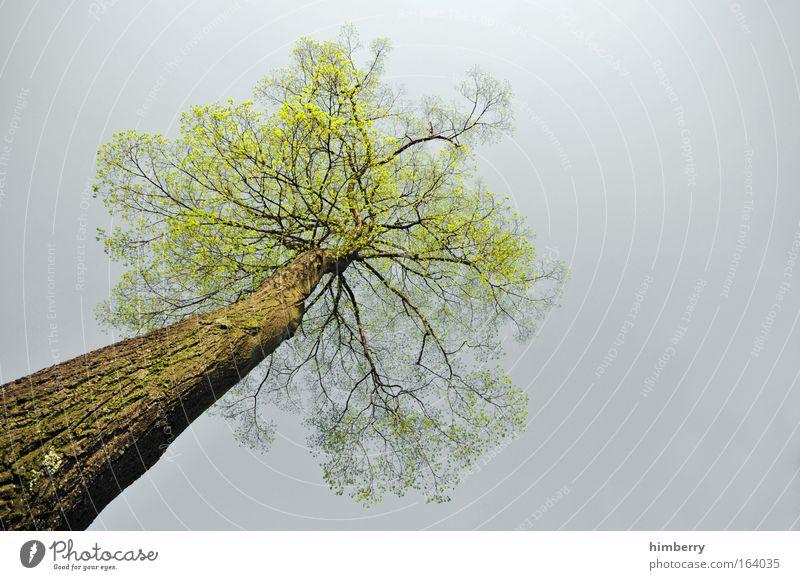 bio blitzableiter Natur Baum grün Pflanze ruhig Leben Erholung Stil grau Park Landschaft Kraft Design Umwelt groß Klima