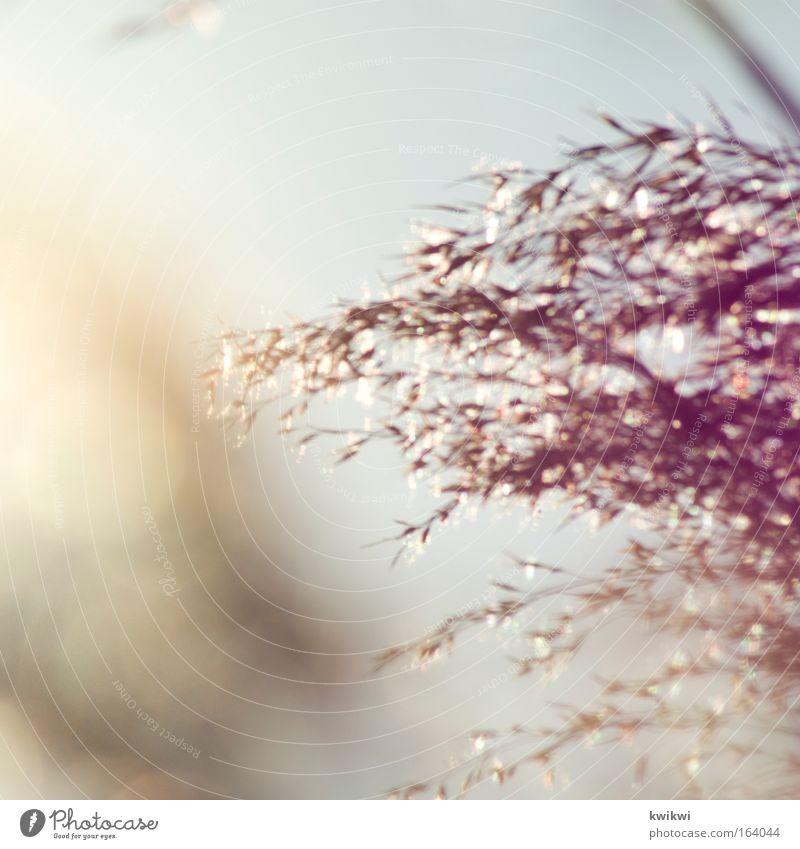 farbspiel Natur Pflanze Gras Sträucher gelb gold rosa rot silber Frühlingsgefühle Warmherzigkeit Farbfoto Gedeckte Farben Außenaufnahme Detailaufnahme