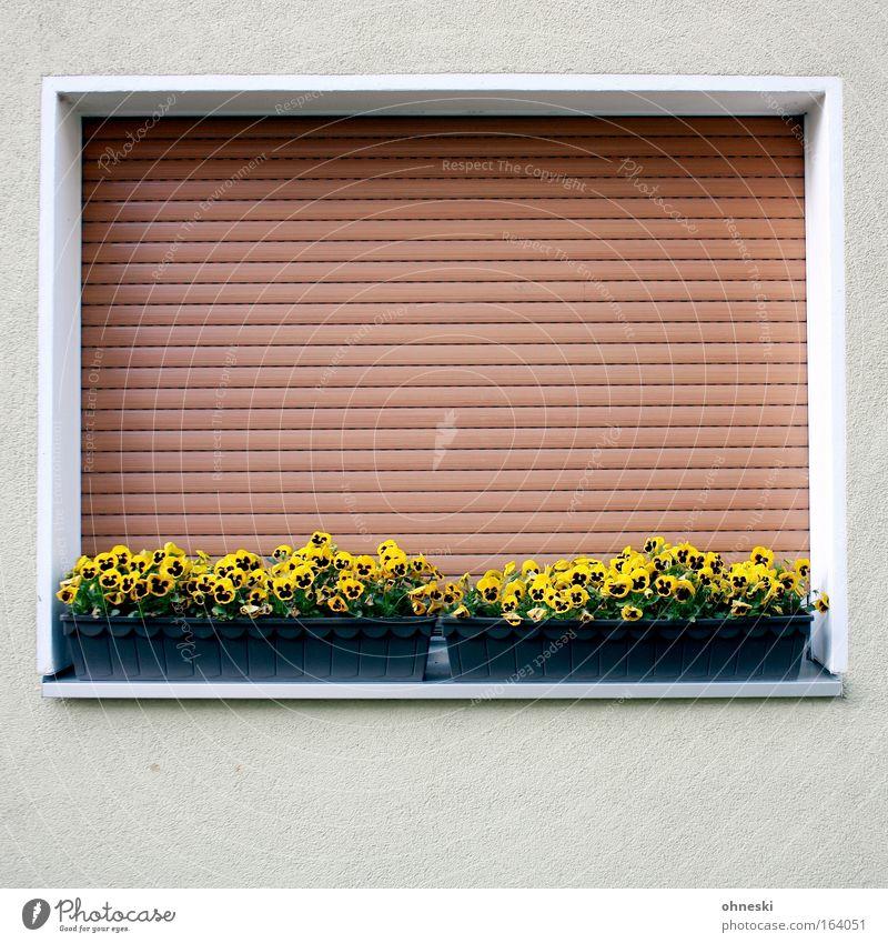 Frühjahrsmüdigkeit Farbfoto Nahaufnahme Menschenleer Textfreiraum unten Tag Zentralperspektive Blume Haus Einfamilienhaus Bauwerk Gebäude Architektur Fenster