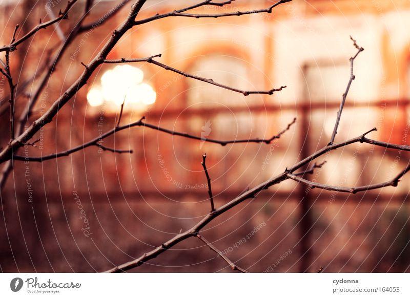[DD|Apr|09] Abendstimmung Natur Baum schön rot ruhig Leben Gefühle Bewegung Traurigkeit Frühling Stimmung Kraft Wind warten Wachstum Zukunft