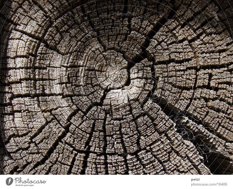 Jahresringe Baum Traurigkeit Trauer Tod Verfall Vergänglichkeit Baumscheibe Als Dinge Kreis Riss verfallen Farbfoto Außenaufnahme Detailaufnahme Muster