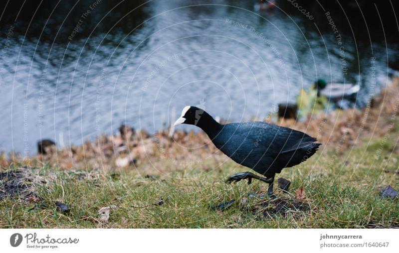 Auf der Hut Natur ruhig Tier natürlich Vogel elegant ästhetisch Beginn Krallen