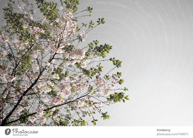 silver blossom Farbfoto Gedeckte Farben mehrfarbig Außenaufnahme Detailaufnahme Menschenleer Textfreiraum rechts Abend Dämmerung Kontrast Starke Tiefenschärfe