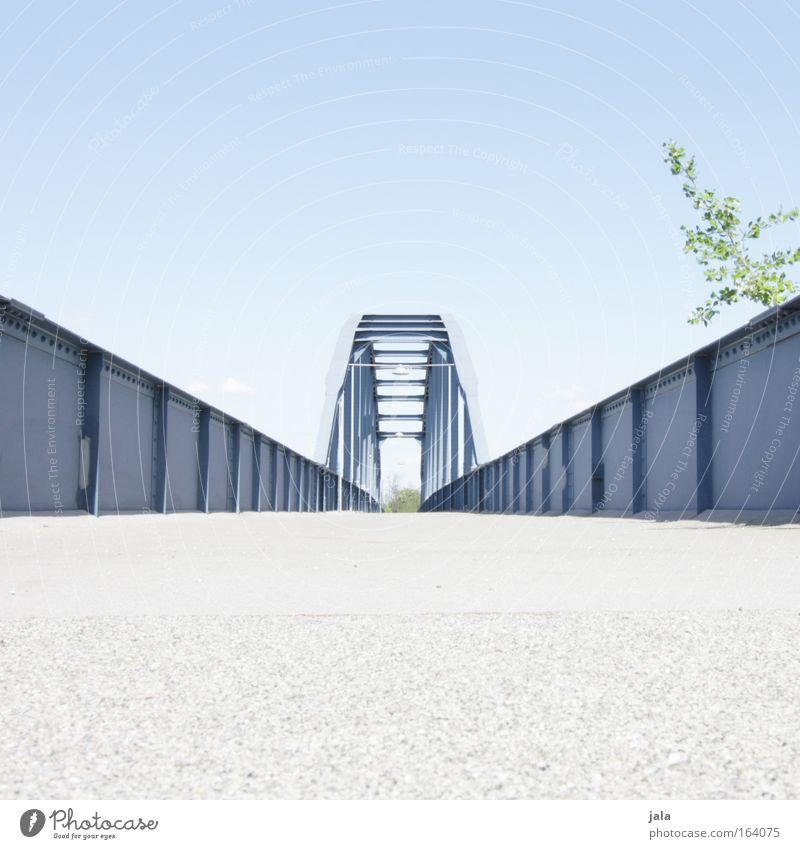 blue gate bridge II Farbfoto Außenaufnahme Textfreiraum oben Textfreiraum unten Tag Sonnenlicht Froschperspektive ruhig Ausflug Sommer Wolkenloser Himmel Baum