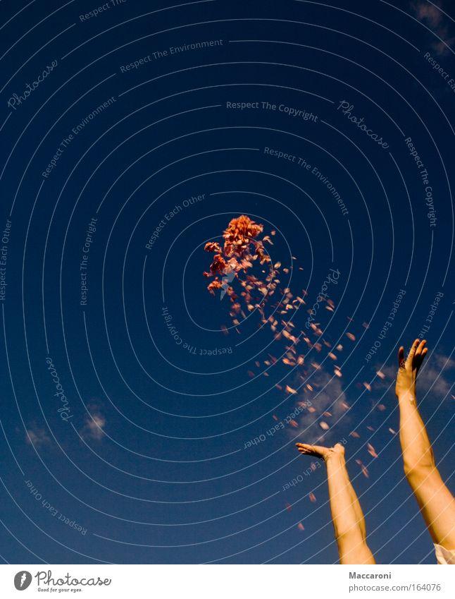Frühlingsrakete Farbfoto Außenaufnahme Textfreiraum links Textfreiraum oben Textfreiraum unten Dämmerung Sonnenlicht Bewegungsunschärfe Zentralperspektive