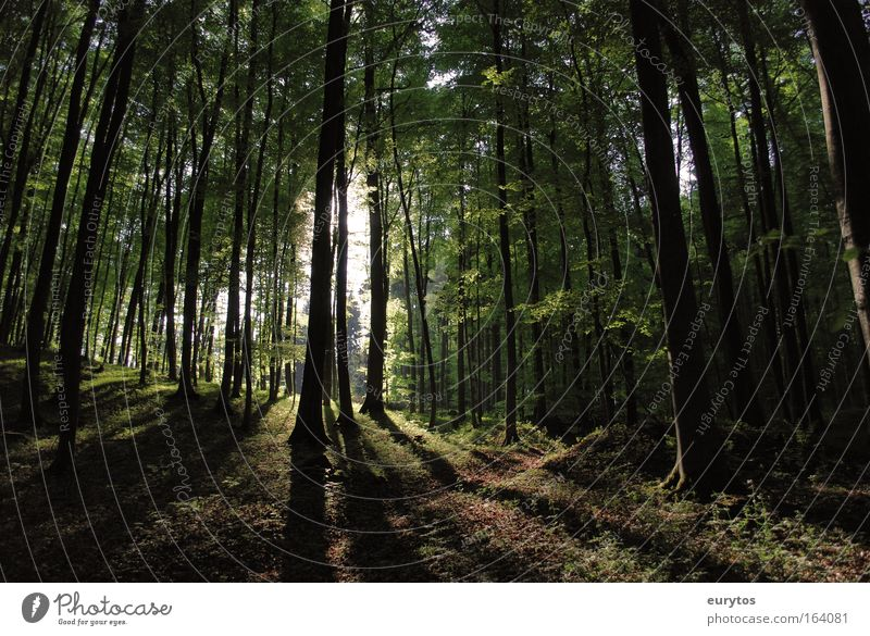"""Sherwood Forest"" Natur Baum grün Pflanze schwarz Tier Wald Erholung Frühling Landschaft Zufriedenheit Umwelt Erde Unendlichkeit Landwirtschaft Jagd"