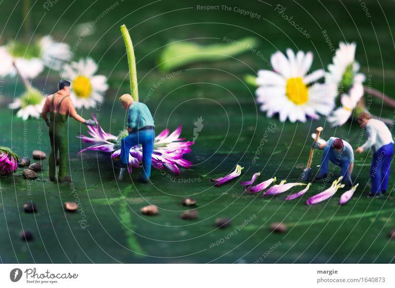 Miniwelten - Gänseblümchen Ernte Arbeit & Erwerbstätigkeit Beruf Gartenarbeit Arbeitsplatz Landwirtschaft Forstwirtschaft Mensch maskulin Mann Erwachsene 4