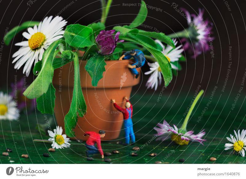 Miniwelten - Umtopfen Freizeit & Hobby Gartenarbeit Arbeitsplatz Baustelle Landwirtschaft Forstwirtschaft Mensch maskulin Mann Erwachsene 2 Pflanze Blatt Blüte