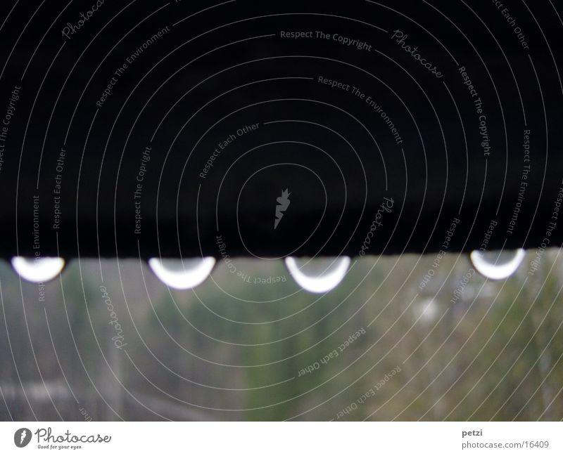 Tropfen mal vier Natur Regen nass grün schwarz weiß 4 Dinge Balken Farbfoto Außenaufnahme Detailaufnahme Menschenleer Textfreiraum oben Textfreiraum unten