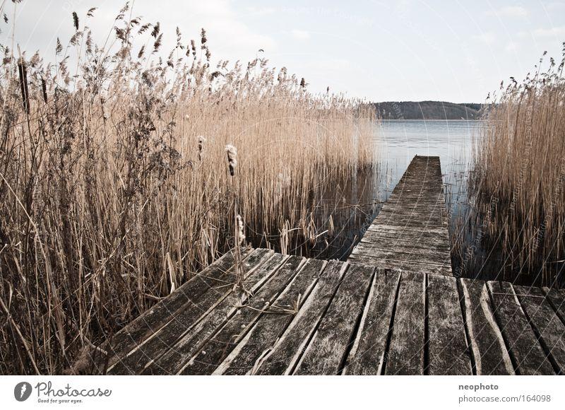 Der Steg vom Haus am See Natur Wasser Himmel ruhig dunkel Erholung Holz Stimmung braun Horizont Hoffnung Sträucher Schilfrohr Seeufer