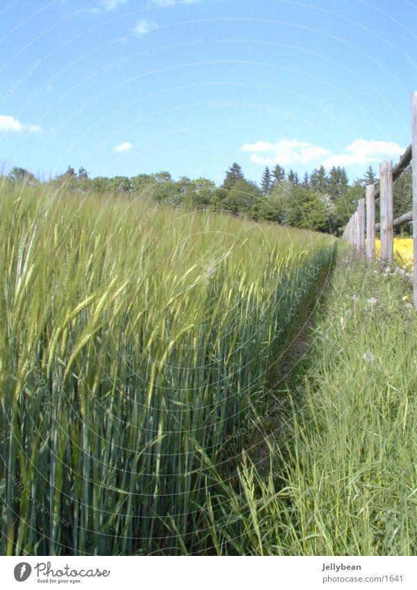 Wiesenrand Gras Zaun Waldrand Fußweg Wolken Himmel Wege & Pfade