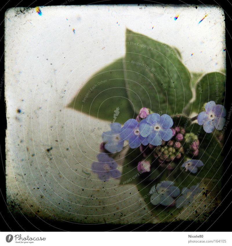 Poesiealbum II Klischee blau Vergißmeinnicht Erinnerung erinnern Pflanze Blüte Frühblüher Dia Rahmen alt Retro-Farben bleich Kitsch Farbfoto Gedeckte Farben