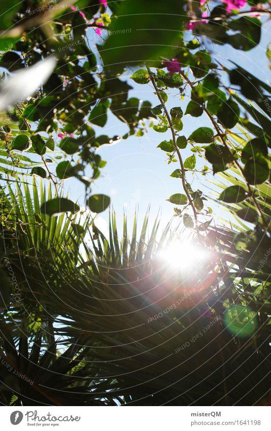 Aus dem Dschungel IV Umwelt Natur ästhetisch oben Abenteuer grün Grünpflanze Grünfläche grünen Grünstich Urwald Unterholz Ferien & Urlaub & Reisen