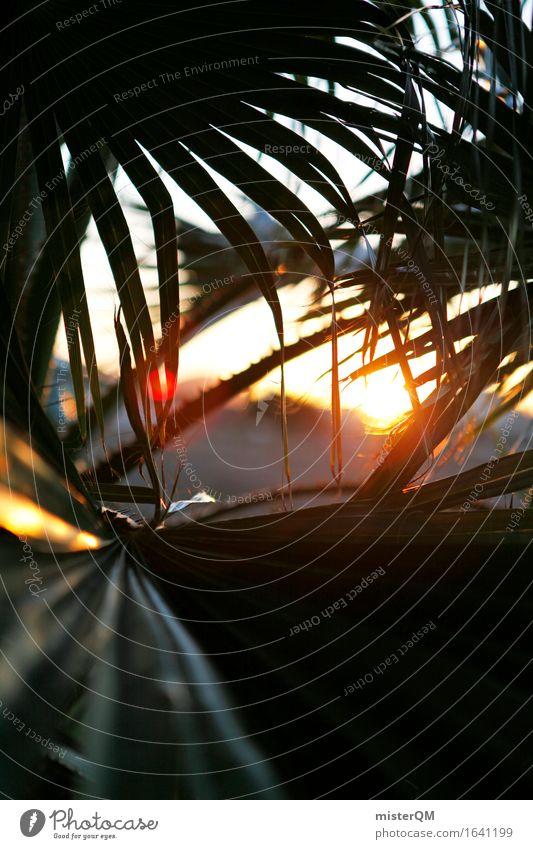 Aus dem Dschungel III Umwelt Natur ästhetisch Sonne Sonnenuntergang Sonnenlicht Sonnenstrahlen Urwald Unterholz Palme Palmenwedel Süden mediterran