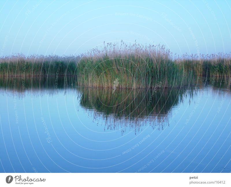 Schilfspiegelung Wasser Himmel See oben unten blau braun grün friedlich Sehnsucht Einsamkeit Idylle Inspiration Steppensee Röhricht Farbfoto mehrfarbig