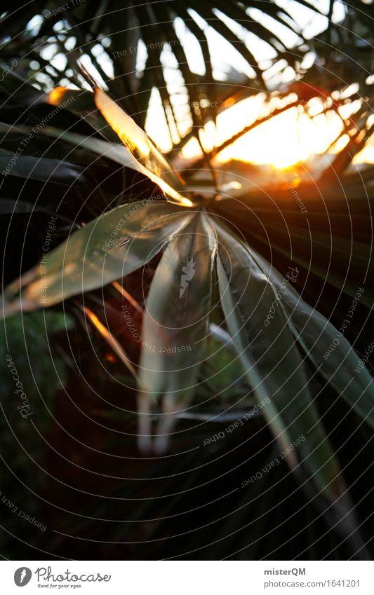 Aus dem Dschungel II Umwelt Natur ästhetisch Urwald Palme Palmenwedel Sonne Sonnenuntergang Sonnenstrahlen Sonnenenergie Blatt grün Urlaubsstimmung Farbfoto