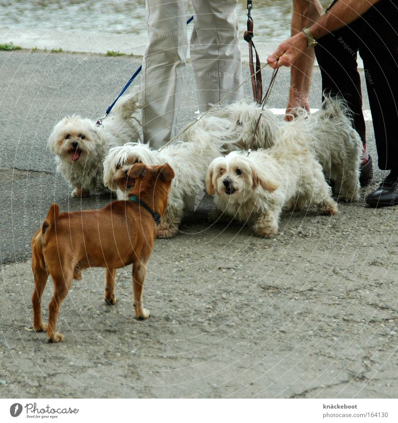 Hunde Tier Tiergruppe Neugier Haustier Tierliebe