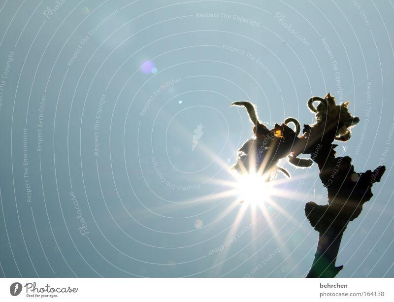 biolampe Farbfoto Außenaufnahme Menschenleer Textfreiraum links Textfreiraum oben Tag Reflexion & Spiegelung Sonnenlicht Sonnenstrahlen Gegenlicht Sommer Natur