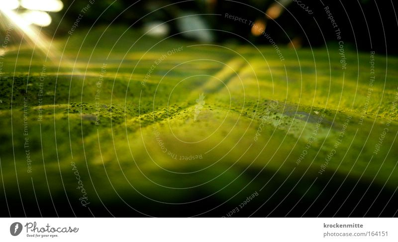 Fotosynthese Natur grün Pflanze Umwelt natürlich Grünpflanze Photosynthese Blattgrün