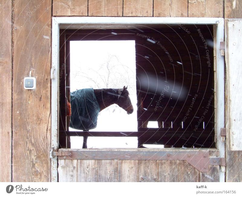 durch-blick ruhig Tier Schnee Holz Pferd