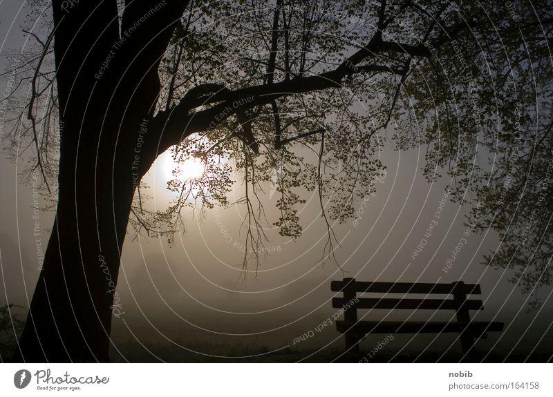 früh um 7 Natur Wasser Baum Pflanze Sonne ruhig Erholung dunkel Landschaft Wiese Herbst Gefühle grau Park Wetter Nebel