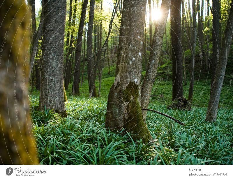 Wald im Frühling Natur Baum grün Pflanze ruhig Erholung Gras träumen Landschaft Zufriedenheit Umwelt frisch natürlich entdecken
