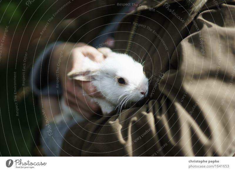 Frohes Hasenfest! Tier Haustier Tiergesicht Fell 1 Tierjunges festhalten kuschlig niedlich Tierliebe Streicheln Hase & Kaninchen weiß Ostern Kuscheln Farbfoto