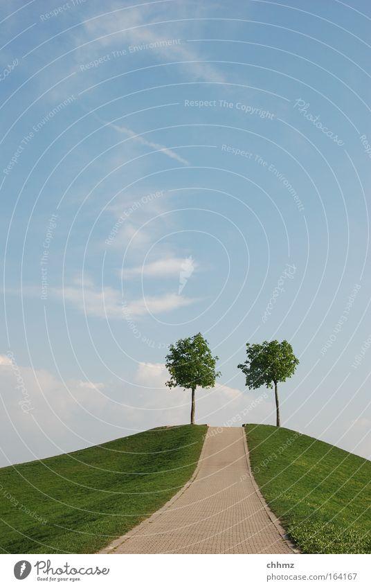 Zweisam Himmel Baum grün blau Sommer Wolken Tier Wiese Gras Wege & Pfade Park Landschaft Zufriedenheit Zusammensein Horizont Richtung