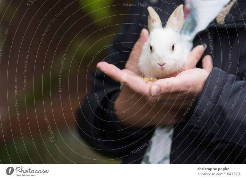 Eine handvoll Hase Tier Tierjunges Garten maskulin niedlich festhalten Fell Haustier Tiergesicht Hase & Kaninchen tragen kuschlig füttern Tierliebe Streicheln