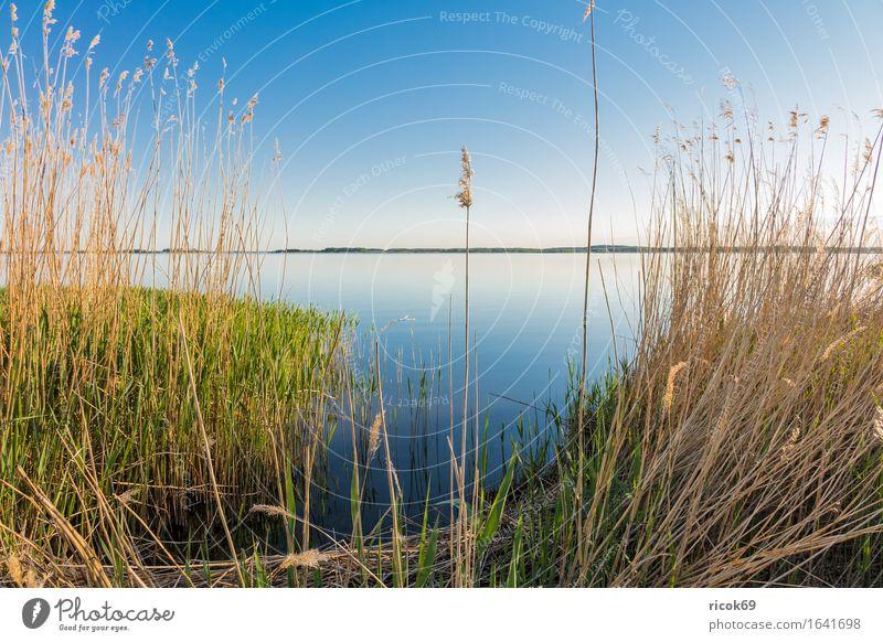 Landschaft am Achterwasser auf der Insel Usedom Erholung Ferien & Urlaub & Reisen Tourismus Natur Wasser Wolkenloser Himmel Küste Bucht See blau Romantik Idylle