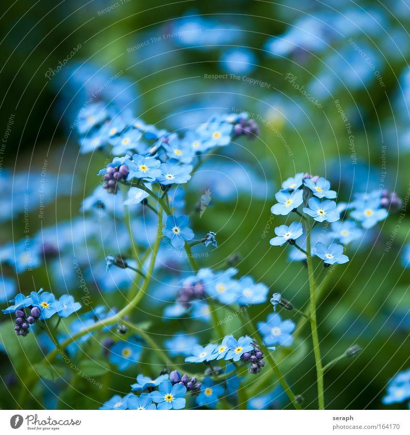 Flachs Unschärfe Sommer Natur Blume Wiese Wachstum süß wild weich blau violett Lein linum usitatissimum Blütenknospen petals flora floral plant pflanzlich
