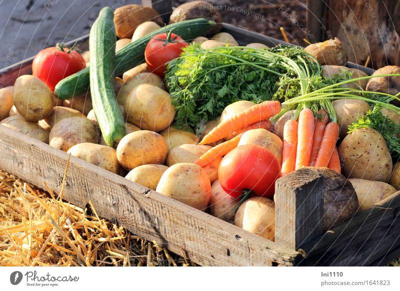 Gemüsekiste grün rot gelb Leben Essen Gesundheit Holz grau Lebensmittel braun orange frisch Ernährung kaufen Kräuter & Gewürze