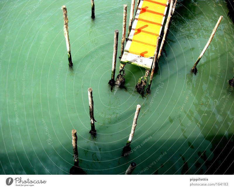 Gelber Teppich Wasser grün ruhig gelb Holz springen Fluss Ende Steg Anlegestelle Flussufer Holzpfahl