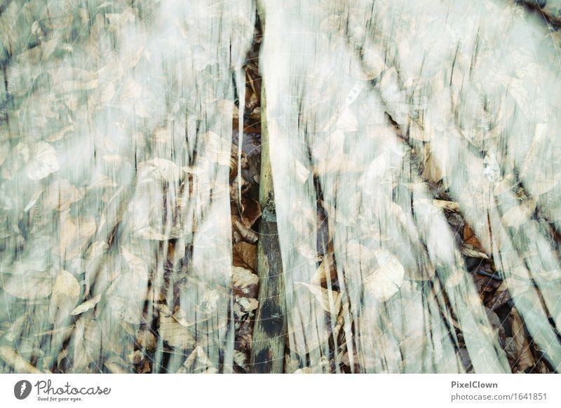 Wald Natur Ferien & Urlaub & Reisen Pflanze schön Baum Landschaft Blatt Umwelt Gefühle Herbst Holz außergewöhnlich Design Tourismus träumen