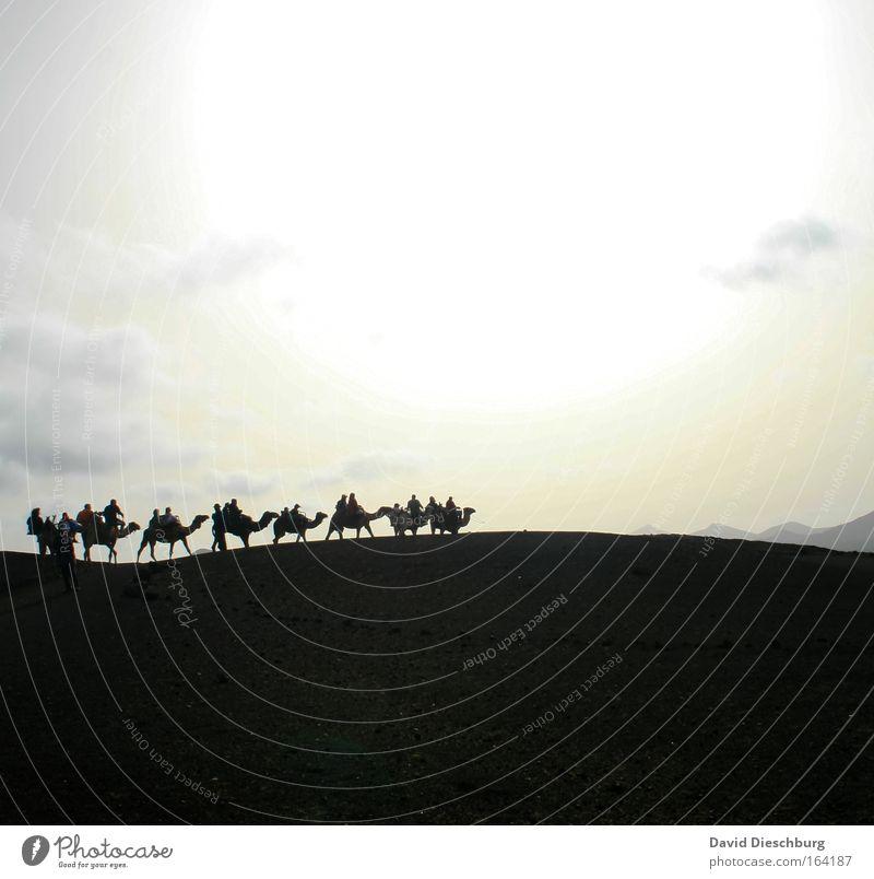 Wüstenromantik Mensch Menschengruppe Natur Landschaft Sand Himmel Wolken Horizont Sonnenaufgang Sonnenuntergang Hügel Tier Nutztier Tiergruppe Herde Abenteuer