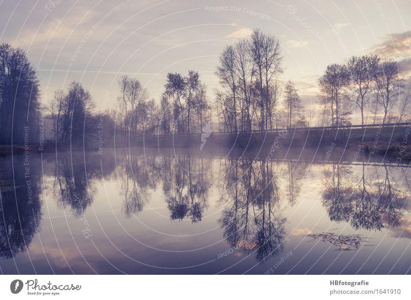 Spiegelungen Umwelt Natur Landschaft Sonnenaufgang Sonnenuntergang Frühling Nebel Moor Sumpf Teich See Freiheit träumen Umweltschutz Zufriedenheit