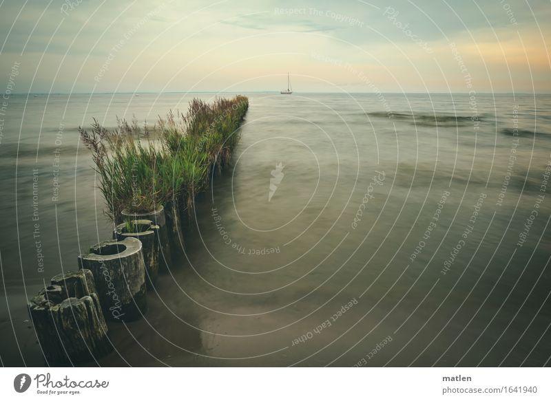 Bewuchs Natur Landschaft Pflanze Wasser Himmel Wolken Horizont Sonnenaufgang Sonnenuntergang Sommer schlechtes Wetter Gras Wildpflanze Küste Ostsee Segelboot