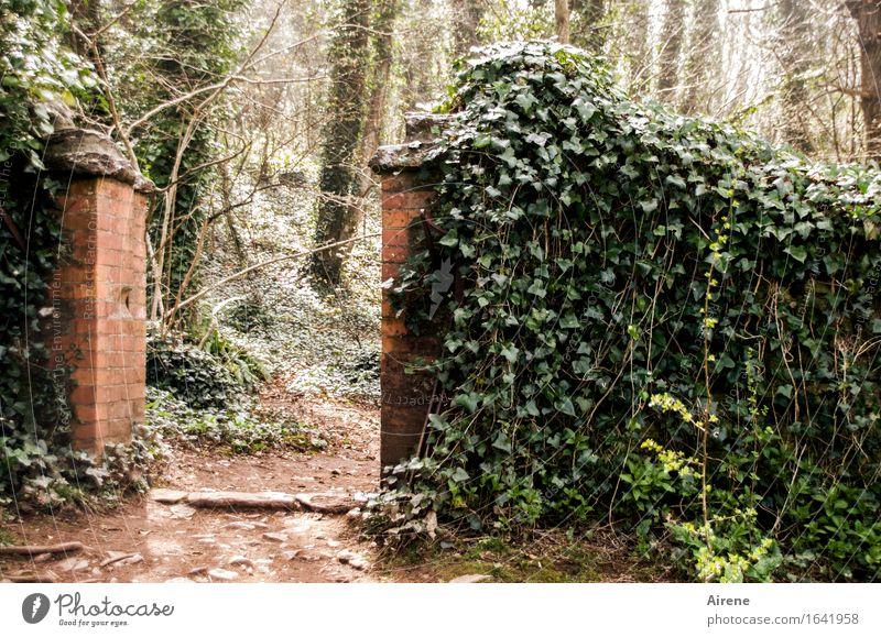 als das Wünschen noch geholfen hat... Pflanze Efeu Grünpflanze Kletterpflanzen Garten Park Wald Wege & Pfade Backstein positiv grün rot Romantik wünschenswert