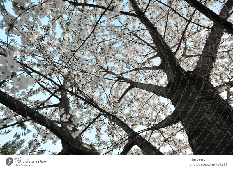 early winter Natur weiß Baum Pflanze Blatt ruhig Landschaft Frühling Blüte hell Park Wetter Klima frisch ästhetisch Schönes Wetter