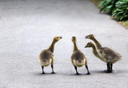 heftige Diskussionen... Natur grün Landschaft Tier Tierjunges Umwelt Leben sprechen Frühling Wege & Pfade klein außergewöhnlich grau braun Zusammensein Park