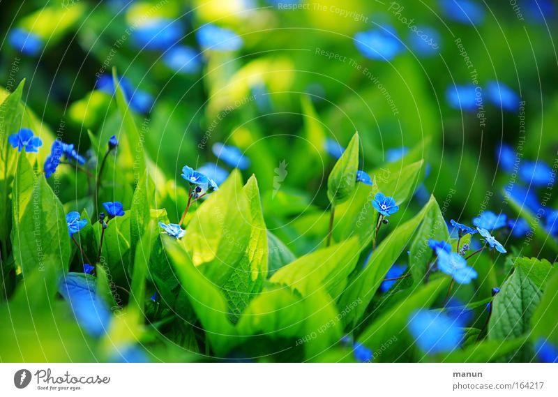 shining blue Natur schön Blume grün blau Pflanze Sommer gelb Farbe Blüte Frühling Park hell Stimmung Design frisch