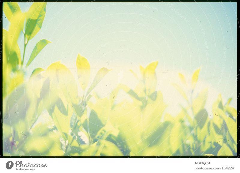 fuck it i love you Natur Himmel Sonne grün Pflanze Sommer Freude Tier Umwelt retro Sträucher Sehnsucht Idylle Vorfreude